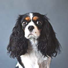 Here's a gorgeous photo from @the salty dog studio #dogsofinstagram #dog #pet #instagood #animals