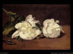 Manet~white roses