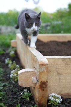beautiful raised bed from Chiot's Run