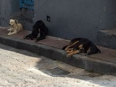 The Street Dogs of Ecuador – Spot Speaks