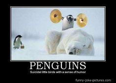 Funny Penguin Meme Joke Picture   Funny Joke Pictures