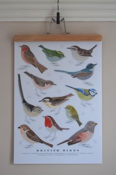 bird print from robin and rose on etsy