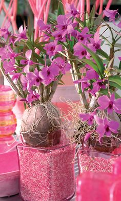 Use the Dendrobium as a natural home perfum thanks to it's wonderful scent.