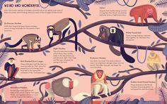 La locura por los monos se cura dibujando