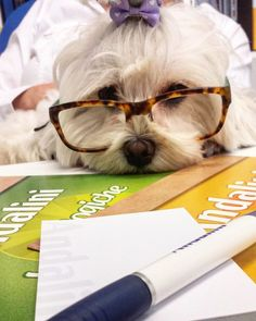 Il lunedì è duro ma anche il giovedì non scherza! Degli scatti rubati alla nostra mascotte/segretaria Gioia durante un'ordinaria giornata di lavoro!🐶🏢 #dogsatworkday #dogsatworfe