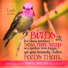 """""""Look at the birds of the air, for the neither sow nor reap nor gather into barns, yet your heavenly Father feeds them. Are you not of more value than they?"""" Mat 6:26. <3"""