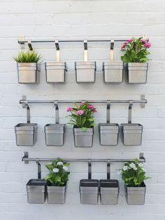 Garden herb wall