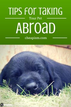 Insider tips for traveling abroad with a pet.