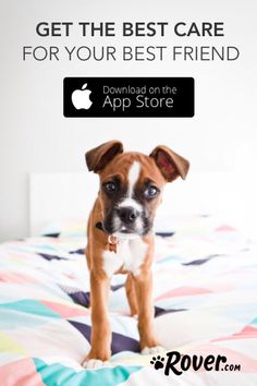 Download the Rover App to connect with the nations largest network of dog sitters!