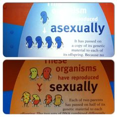 Great pictorial representation for asexual vs sexual reproduction. (Field Museum - Chicago)