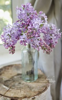 lilacs @ French Country Cottage LOVE this look! Lilac Flowers, Fresh Flowers, Spring Flowers, Beautiful Flowers, Lilac Tree, Lavender Cottage, Malva, French Country Cottage, Cottage Style
