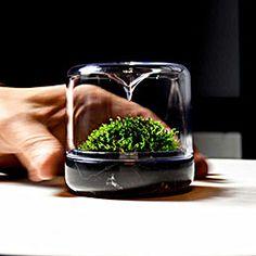 mossarium sanctuary nero marquina botanica 1000