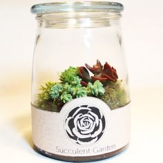 terrarium :: Succulent Garden by Your Moss Garden, $28 on sale from $34