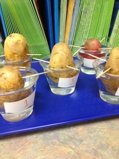 How can you grow a potato plant without a seed? Science Lab for grade! How can you grow a potato plant without a seed? Science Lab for grade! Fourth Grade Science, Kindergarten Science, Middle School Science, Elementary Science, Science Classroom, Teaching Science, Science For Kids, Science Activities, Science Fun