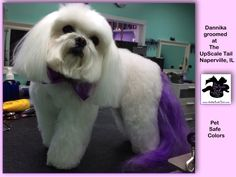 The UpScale Tail, Pet Grooming Salon, Naperville, IL www.theupscaletail.com