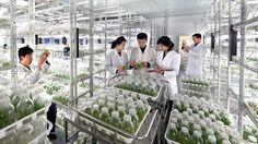 새로운 과학기술성과를 이룩할 열의안고 -국가과학원 생물공학분원에서-