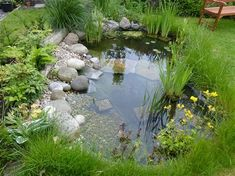 Wildlife pond – one year on…. – Shell'sDuck – My gallery – The RSPB Community Wildlife Pond – a year … Ponds For Small Gardens, Small Ponds, Backyard Water Feature, Ponds Backyard, Backyard Waterfalls, Garden Pond Design, Landscape Design, Natural Pond, Pond Landscaping