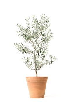 The Best Indoor Trees (and Big Plants) to Grow in Your Living Room - Architectural Digest