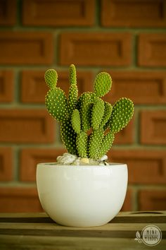Cactus Beach - Imagine you strolling along the beach . Is there anything more beautiful than finding a lush cactu - Cacti And Succulents, Planting Succulents, Planting Flowers, Cactus Plante, Pot Plante, Fake Plants Decor, Plant Decor, Easy To Grow Houseplants, Decorated Flower Pots