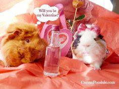 Cinnamon asking Cookie to be his valentine