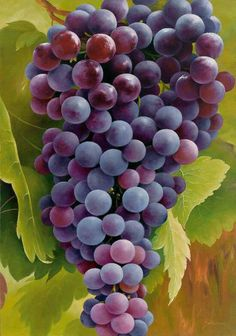 Grapes... A Symbol of {The Tribe of Joseph} of Israel*