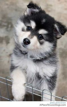 I want this puppy#Repin By:Pinterest++ for iPad#