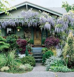 Gorgeous front yard, so wild and free!