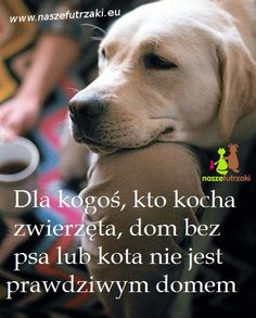 Save Life, Dog Quotes, Cute Puppies, I Love You, Quotations, Nostalgia, Humor, Motivation, Pets
