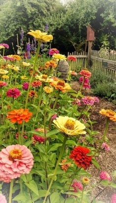 Zinnia Garden, Cut Flower Garden, Flower Farm, My Secret Garden, Colorful Garden, Garden Cottage, Dream Garden, Garden Inspiration, Beautiful Gardens