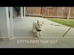 Kitty Pryde DeHaro-Miles first time outside. 38 seconds. It's just riveting.  #KittyPayne #FosterFailure #AnimalLover #Cats #Kittens #FostersSaveLives #Rescue #RescueCat #ILoveMyCat #HappyEnding #AdoptDontShop #xpupspack #deharo70