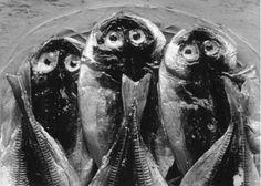 Nathan Lerner - Three Fish, Yugawara, Japan, 1974