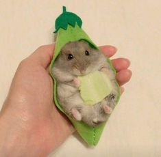 Baby Animals Super Cute, Cute Little Animals, Cute Funny Animals, Baby Animals Pictures, Cute Animal Pictures, Animals And Pets, Teddy Hamster, Hamster Toys, Funny Hamsters