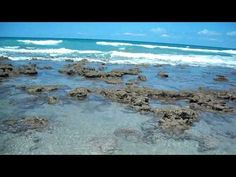 ☮Bathtub Reef Beach ☮ - YouTube