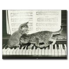 Two kitten playing on piano keyboard, (B&W) Postcards. Getty Images