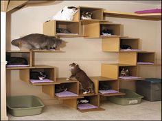33 Engríe a tu minino con increíbles estantes de pared para gatos Niche Chat, Outdoor Cat Enclosure, Cat Cages, Cat Towers, Cat Shelves, Animal Room, Cat Playground, Cat Room, Cat Condo