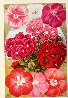 Wings of Whimsy: 1901 Childs' Seed Catalog #vintage #ephemera