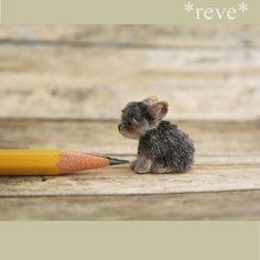 OOAK Realistic Miniature ~ Yorkie puppy ~ Handmade sculpture * Reve in Dolls & Bears, Dollhouse Miniatures, Artist Offerings Needle Felted Animals, Felt Animals, Cute Baby Animals, Needle Felting, Miniature Yorkie Puppies, Yorkie Puppy, Puppies Puppies, Miniature Crafts, Miniature Dolls
