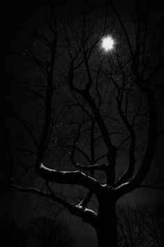 my edits tree Black and White Full Moon moon night dark forest moonlight black and white photography dark forest