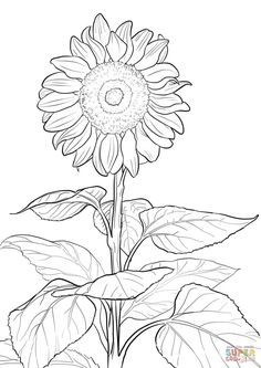 7 Best Art Therapy Adult Colouring Books Images On Pinterest