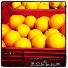 naranjas y limones de Soller