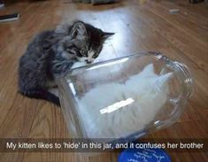 24 Funny Animal Pictures Of The DayTap the link to check out great cat products we have for your little feline friend!