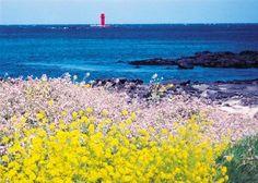 Seascape Paintings, Landscape Paintings, Canola Flower, Seoul Korea Travel, Permaculture Design, Jeju Island, Nature Aesthetic, Destinations, Aesthetic Pictures