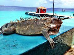 Bonaire2.jpg (960×720)