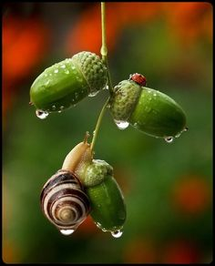 as the snail approached…  ladybug waited patiently…