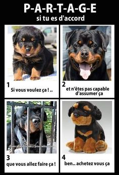 Animals And Pets, Funny Animals, Cute Animals, Animal Protection, Cane Corso, Geek Girls, Pet Health, My Animal, Rottweiler