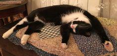 Отдыхающий Томас.