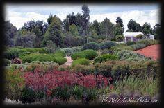 Cranbourne Botanical Gardens.