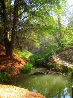 ucr botanical gardens pictures - Google Search senior pics here!!!