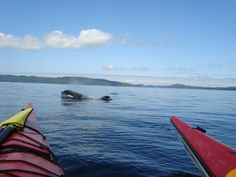 kayaking in BC with killer whales
