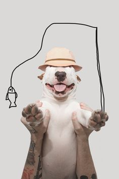 Meet Jimmy (The Incredible Bull Terrier) Through 25 Amazing Photos - Fullact Trending Stories With The Laugh Mixture Chien Bull Terrier, British Bull Terrier, English Bull Terriers, Jimmy Choo, I Love Dogs, Cute Dogs, Funny Dogs, Photo Animaliere, Cute Animal Pictures